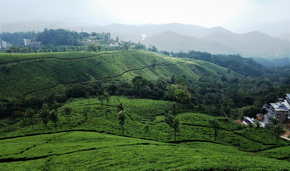 Munnar beautiful view Kerala India