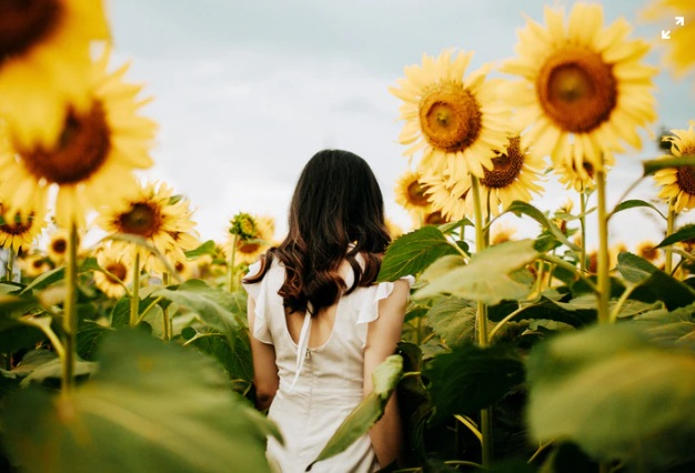 Girl Walking in Sunflower Field with broken heart