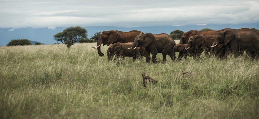 Group of Elephant realmex2 pro