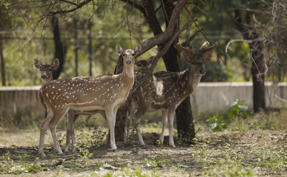 Top Places to Visit in Chhattisgarh – Rich in Nature